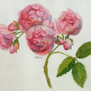 Old-fashioned Roses by