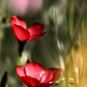 Spring Flower 2 by