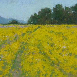 Coastal Mustard Fields by