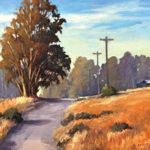 Petaluma Backcountry by