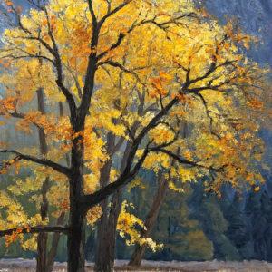 Black Oaks in Fall-Yosemite Valley by