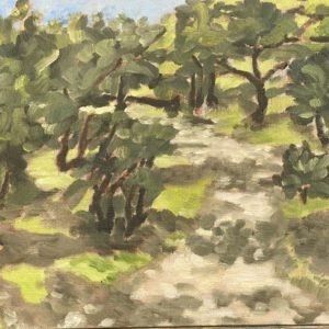 Oak Grove park Oaks by