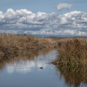 Adobe Creek at the Mountain View baylands by
