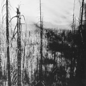 After the fires II