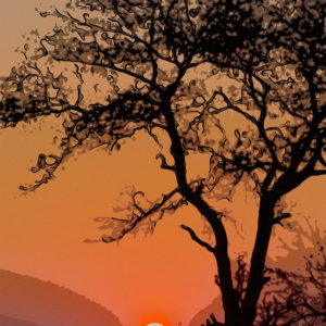 Londolozi Sunrise Abstract by