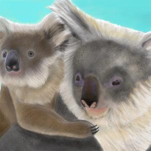 Koala Love by