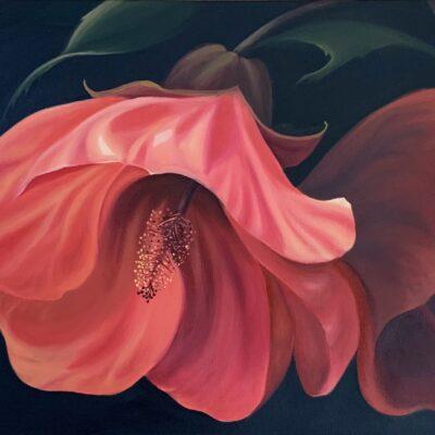 Tangerine Abutilon by