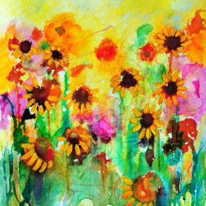 sunflowers field by